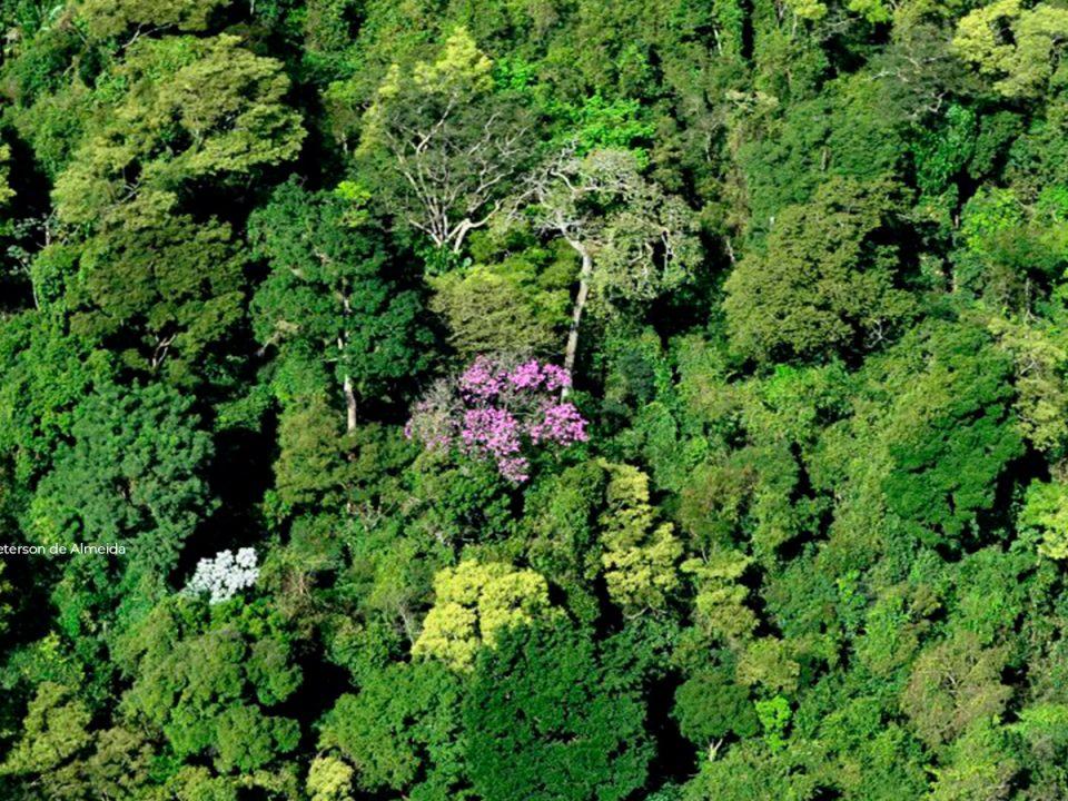 Grupo AB areias adquire área de floresta de Mata Atlântica